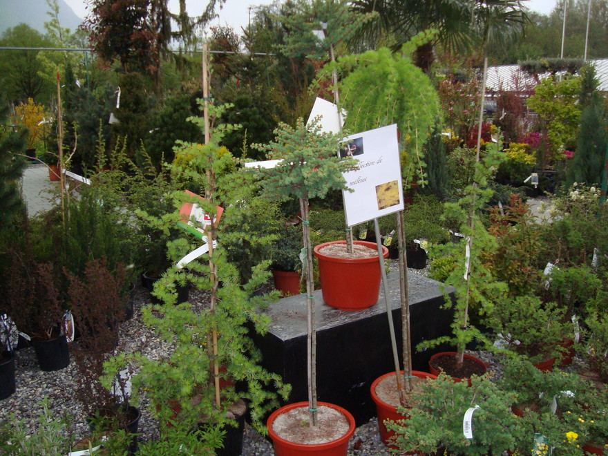 [www.gardencentre-noville.ch][115]3981