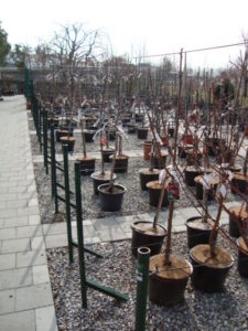 [www.gardencentre-noville.ch][790]3468